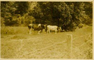 Sessenta anos da Inauguração do Posto Agropecuário Municipal
